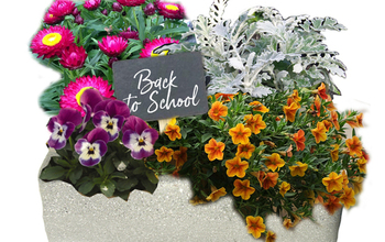 Manage campaigns preview back to school centerpiece mockup with garden sign
