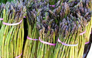 Manage campaigns asparagus