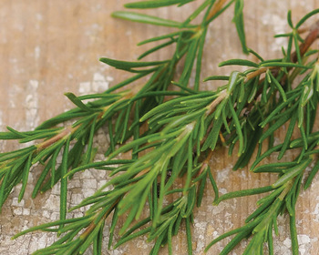 Market card herb  rosemary