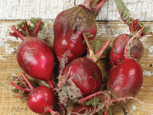 Radish, Early Scarlet Globe-RD111