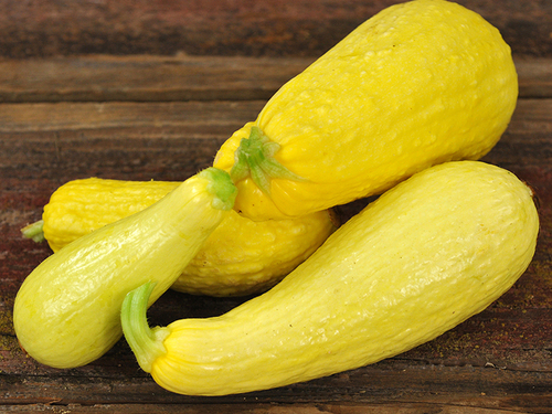 Squash, Early Prolific Straightneck-SSQ115