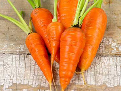 Carrot, Chantenay Red Core-CR111