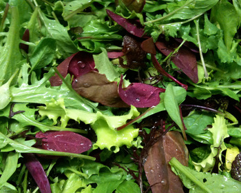 Market card salad blend  european mesclun mix sb101