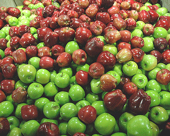 Market card mixed apples