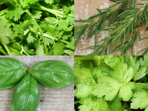 Holiday Herb Bundle (BC)