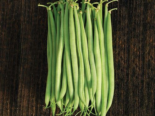 Tavera Haricot Vert do not sell