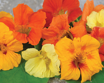 Market card flower nasturtium tall trailing mix reduced