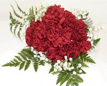 Market card 12 stem red carnation bqt