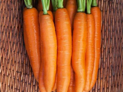 DO NOT SELL Negovia Carrot