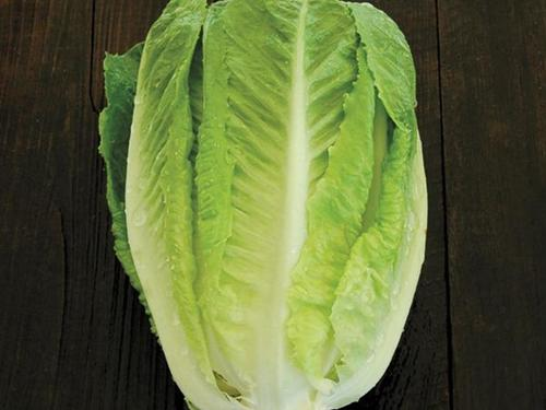Green Towers Romaine Lettuce