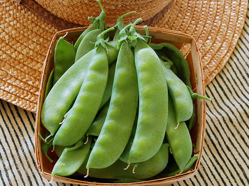 DO NOT SELL Oregon Sugar Pod II Snow Pea